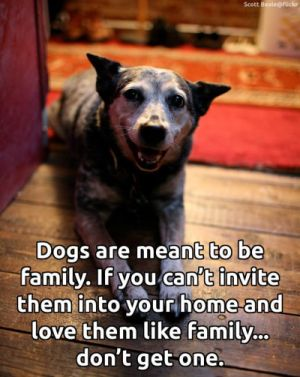 Keep your dog in the family